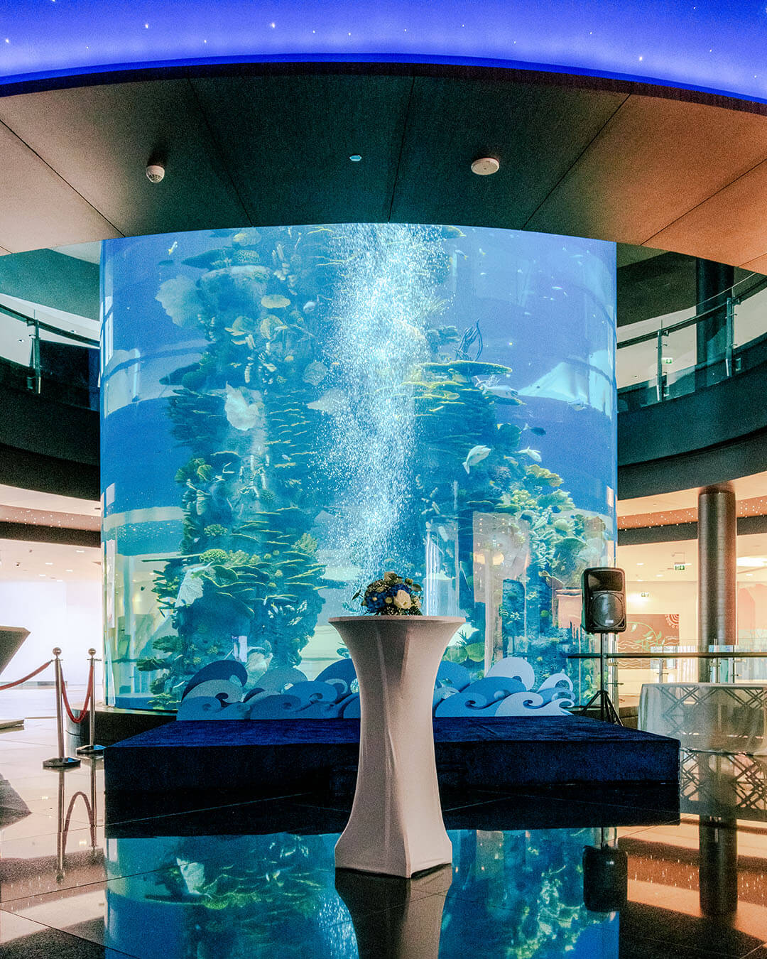 Read more about the article Diver's Reception